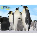 National-Geographic-Kids-63-Piece-Super-3D-Childrens-Puzzle-Penguins-222.jpg
