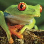 National-Geographic-Super-3D-Tree-Frog-Puzzle-63-Piece-2222.jpg